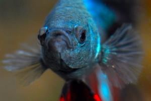 Les 5 poissons du mois d'Août