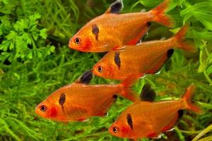 Les 5 poissons Fishipédia du mois de juillet