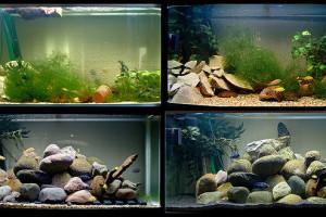 aquarium_style