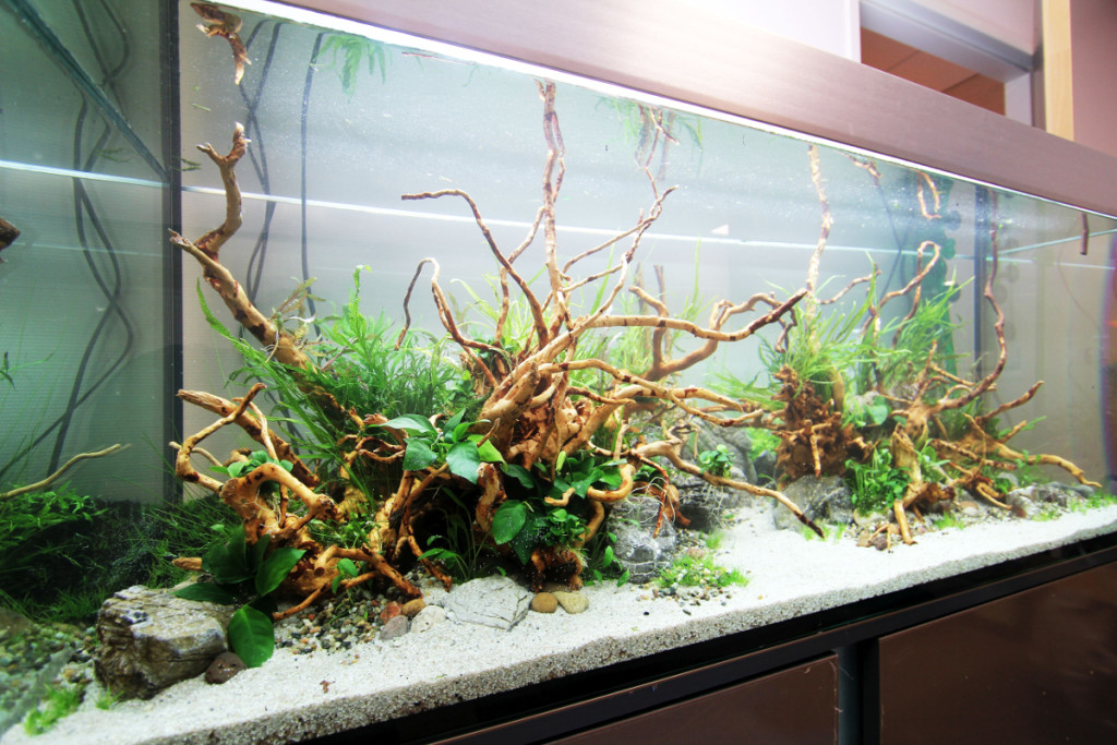 Comment Realiser Un Aquarium Aquascaping