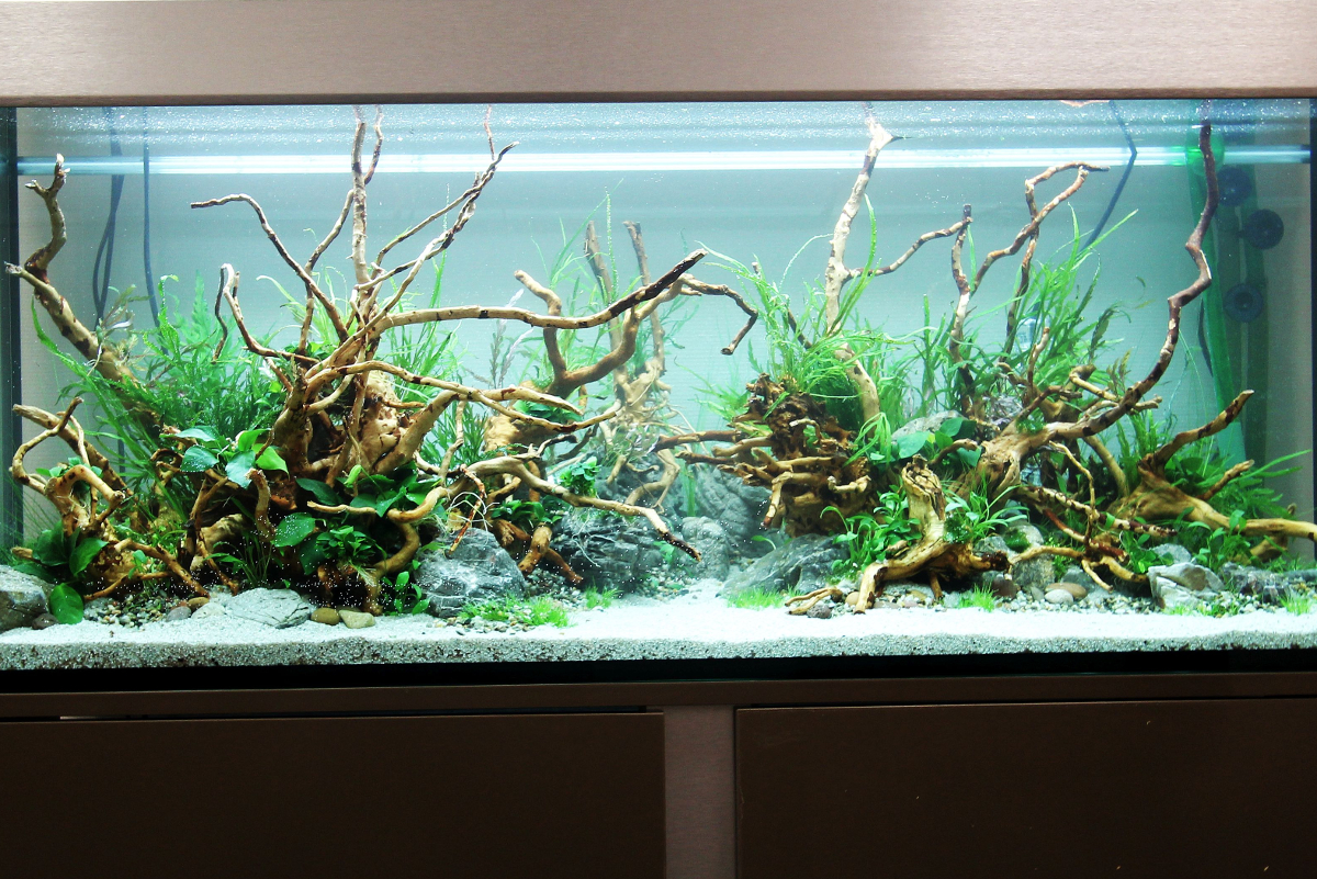 Aquascaping la meilleure m thode for Racine aquarium