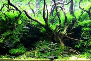 Aquascaping : Les différents paysages