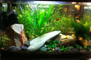 2nd aquarium