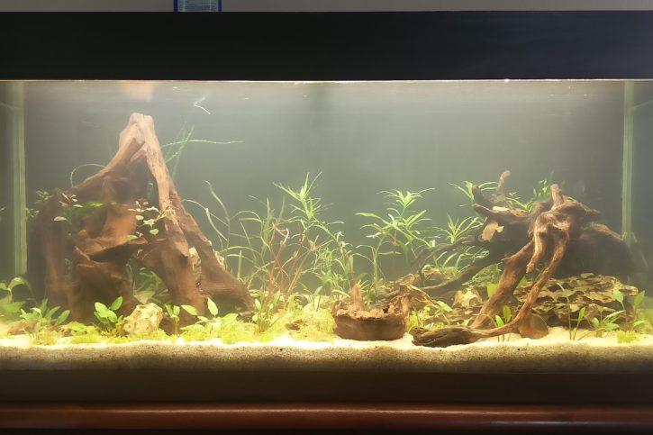 180 litres amazonien