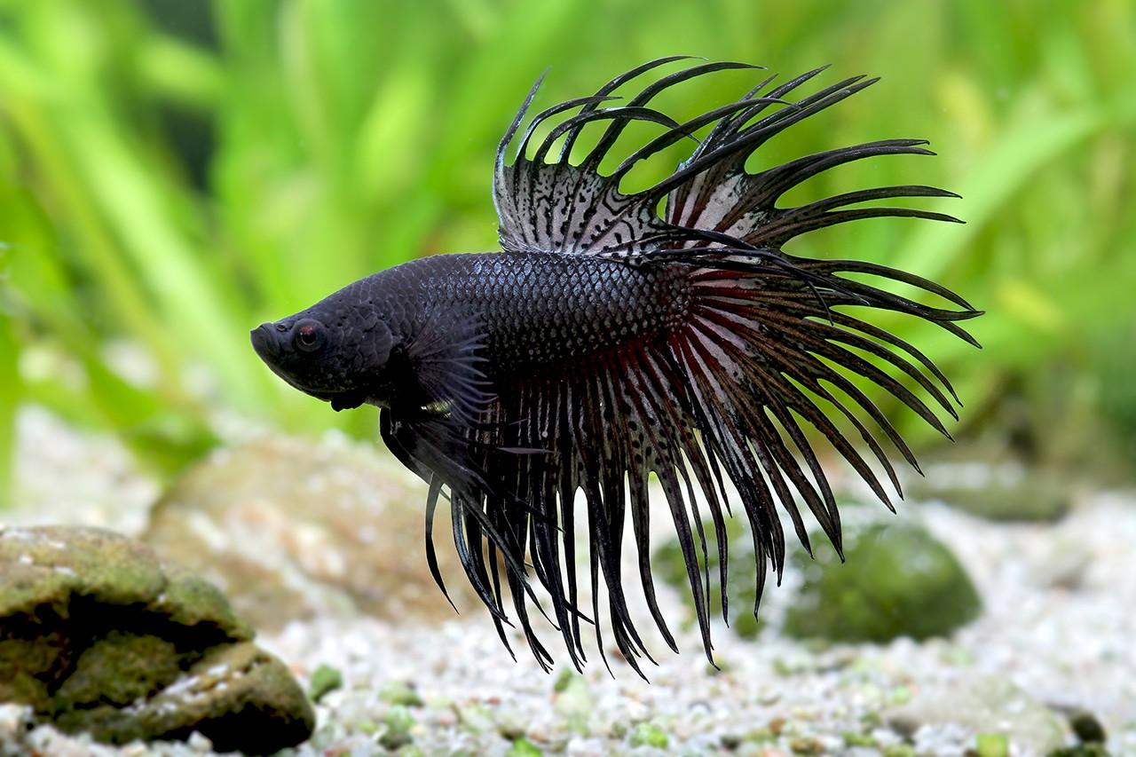 Accueil fishipedia l 39 encyclop die des poissons d 39 eau douce for Poisson eau douce pas cher