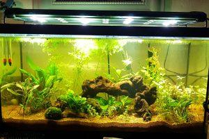 Aquarium amandae