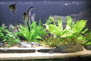 Aquarium de Pierre