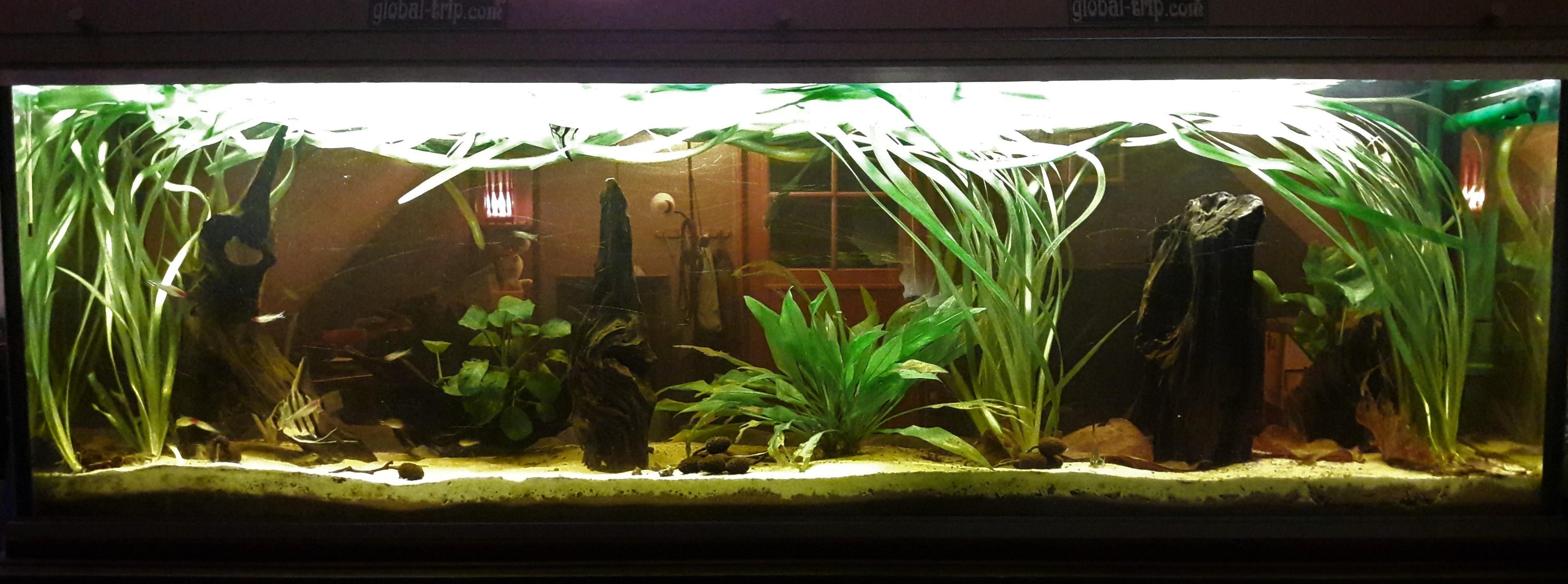Store locator Fishipedia