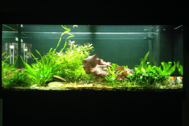juwel rio 240