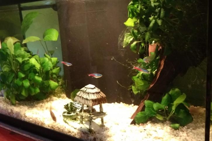 1er aquarium