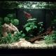picture of 1er aquarium
