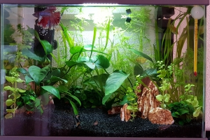 Prmier aquarium