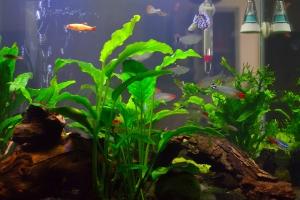 SuperFish Aquarium Home 40