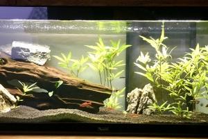 """Mon premier """"vrai"""" aquarium"""