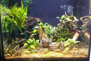 Aquatlantis sallon