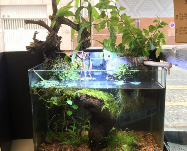 aquarium cocoplant