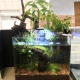 picture of 20L lierre CocoPlant
