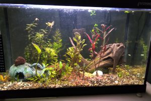 Aquarium Rectangle 20 Gallons
