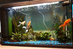 2eme aquarium - 113 L