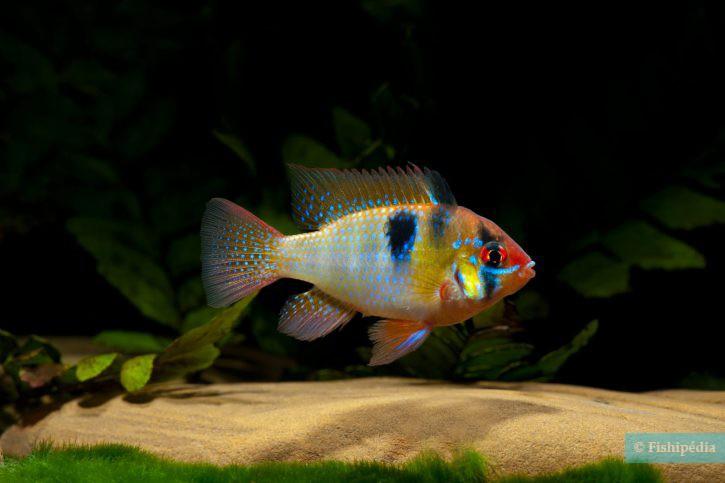 service de rencontres gratuit beaucoup de poissons