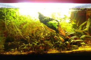 Aquarium de 54l