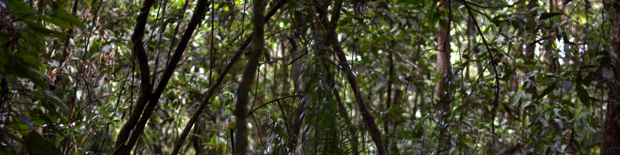 Poissons et milieux aquatiques d'Amazonie