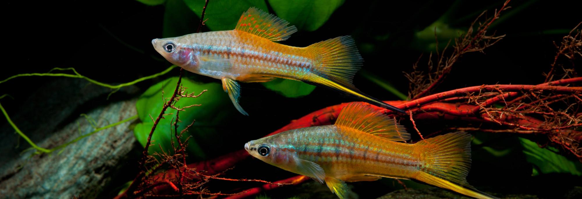Les aquariums des membres