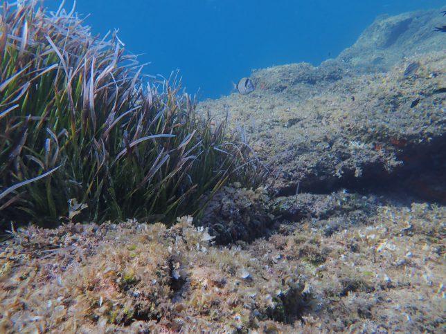plus de poissons dans le site de rencontre de la mer