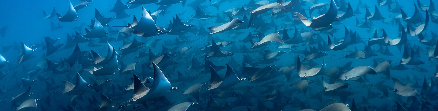 Plongée & Randonnée subaquatique