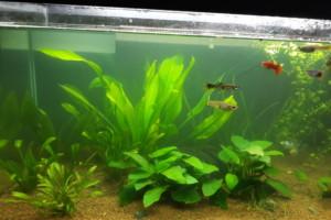 Mon aquarium