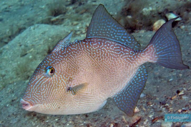poisson n le site de rencontre de la mer match Dating événement