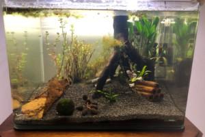 Aquarium 1 Biotope Asiatique