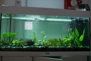 Aquarium Biotope Australo Guinéen