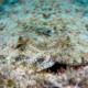 Les aquariums biotopes et les paludariums